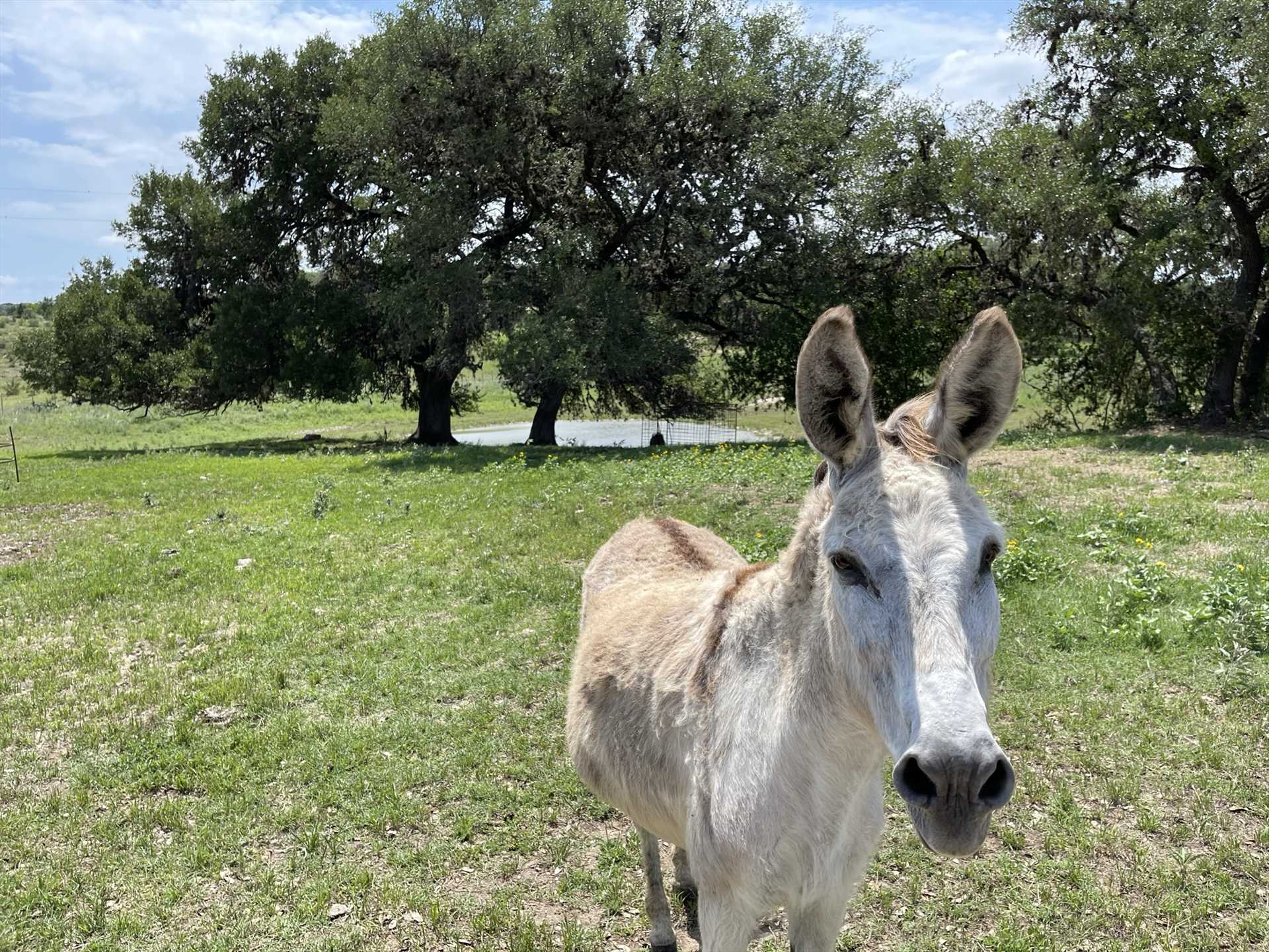 This is your official greeter, Charlie the donkey. The hosts don't have the heart to tell him he isn't in charge!