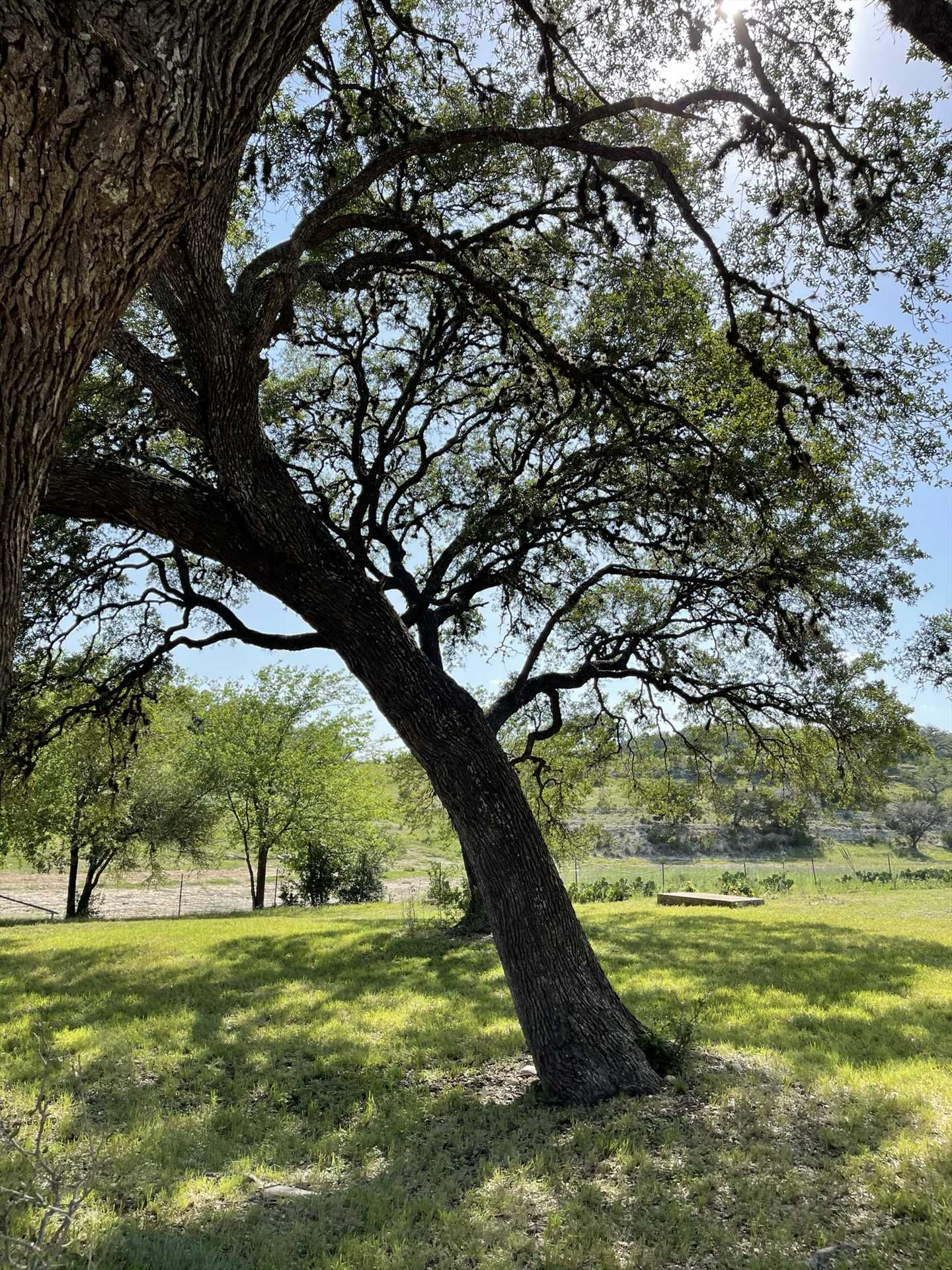 If you'd like to see more of our gorgeous Texas Hill Country, there are plenty of winding roads in the vicinity, on which you can take a scenic tour!