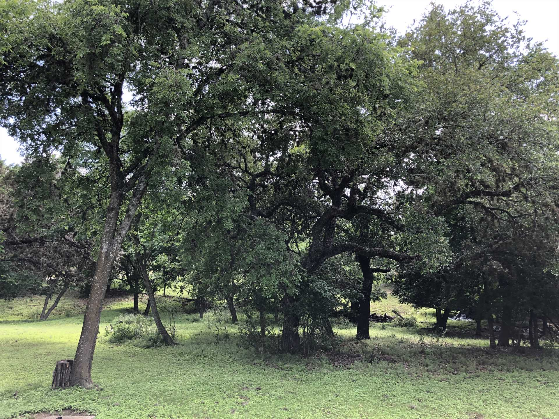 The trees populating the grounds here serve as a backdrop for wildlife viewing, and are great spots for family photos, too!