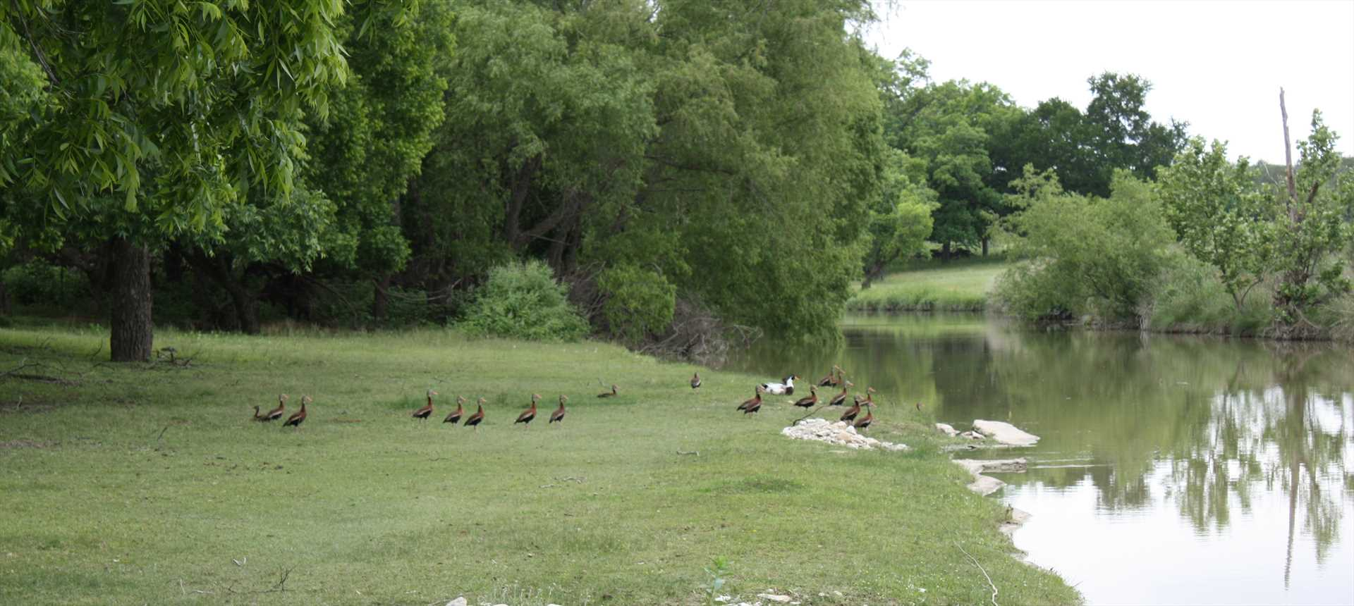 There are 42 scenic acres on the ranch, and you're welcome to stroll the grounds. There's tons of wildlife here!