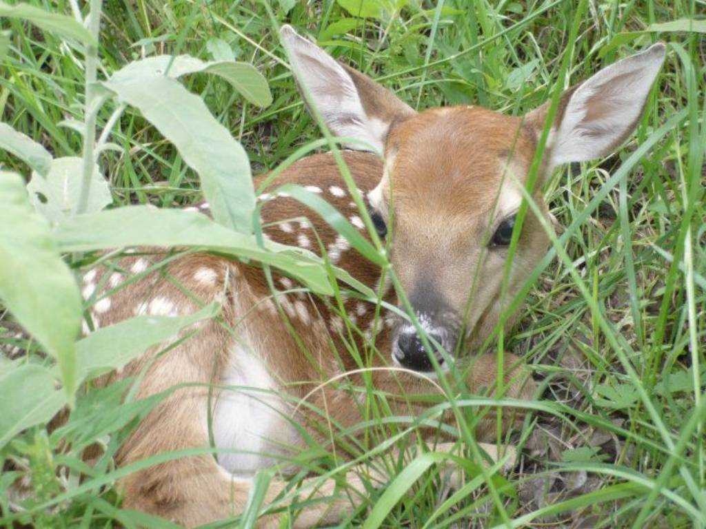 There's plenty of wildlife here for nature lovers, and the Hill Country State Natural Area is nearby, too!