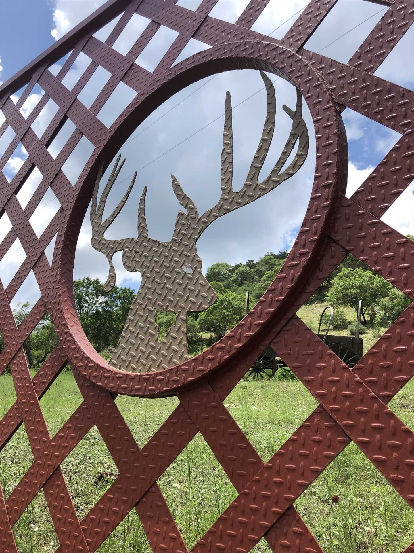 Wildlife ahead! Here's your gateway to all the very best the Hill Country has to offer.