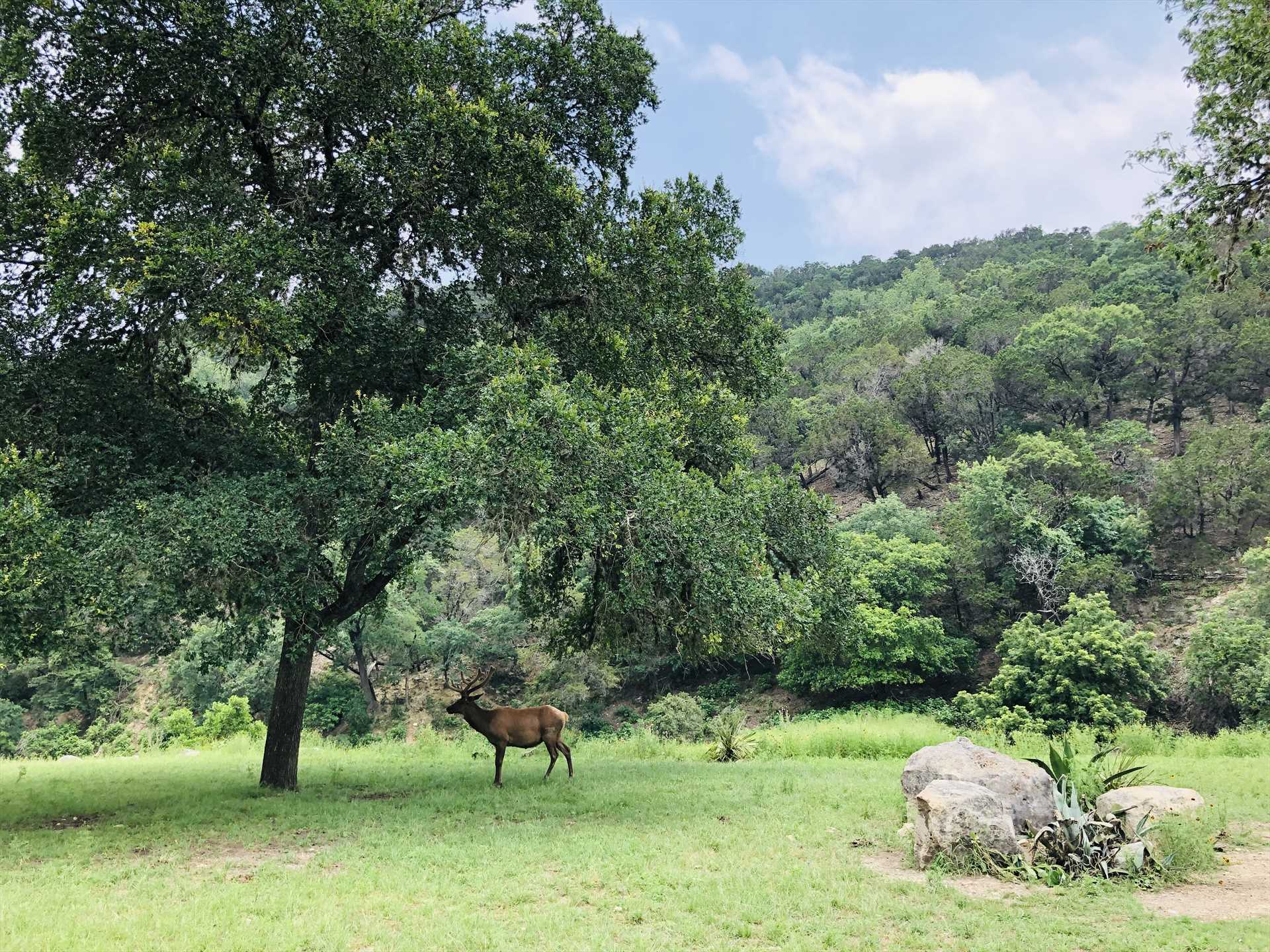Wildlife, wide open skies, forests and mountains as far as the eye can see. Join our happy guests who love it here!
