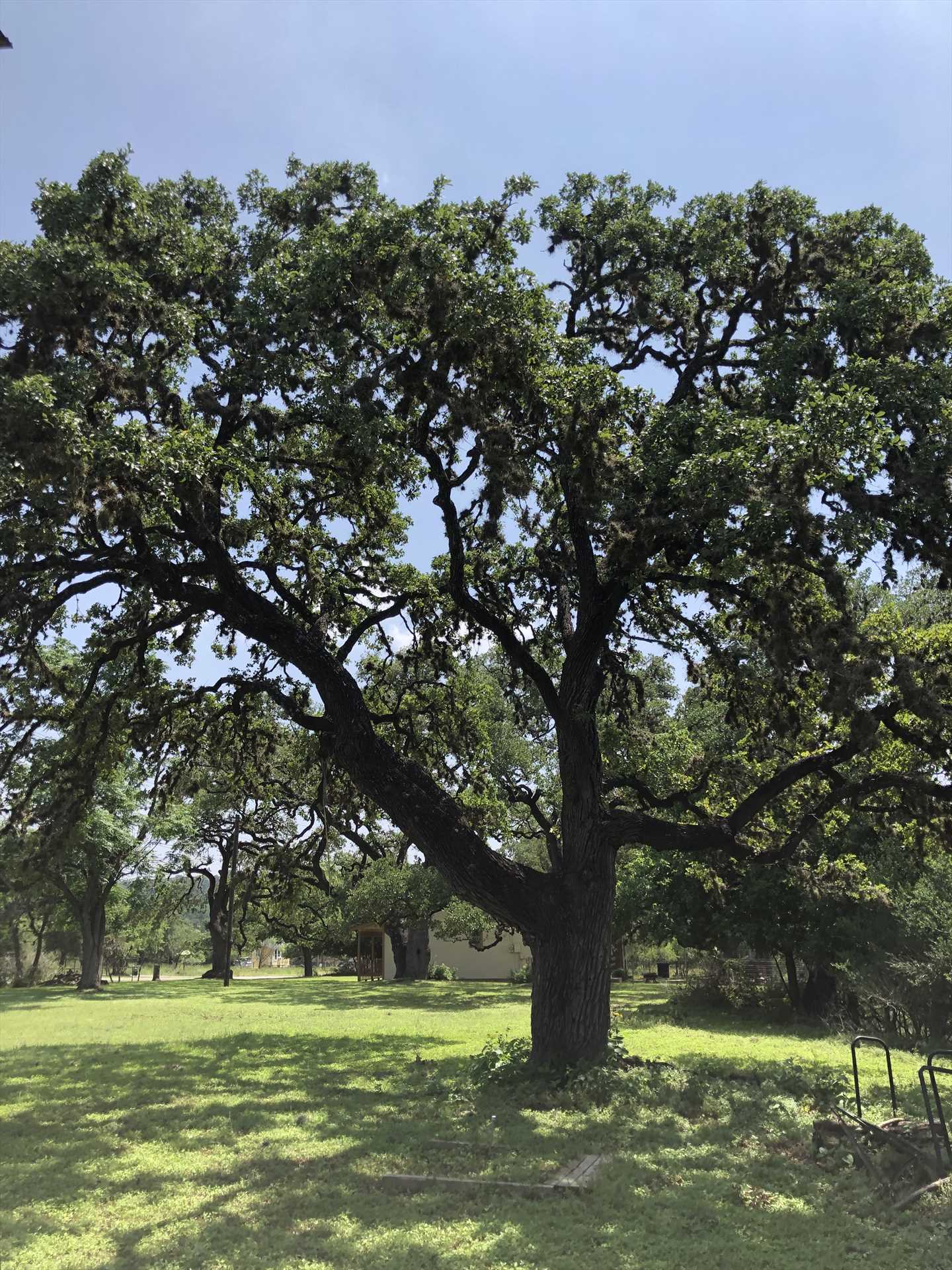 Plenty of oaks and other trees cover the property here. They provide the perfect setting in which you can unwind.