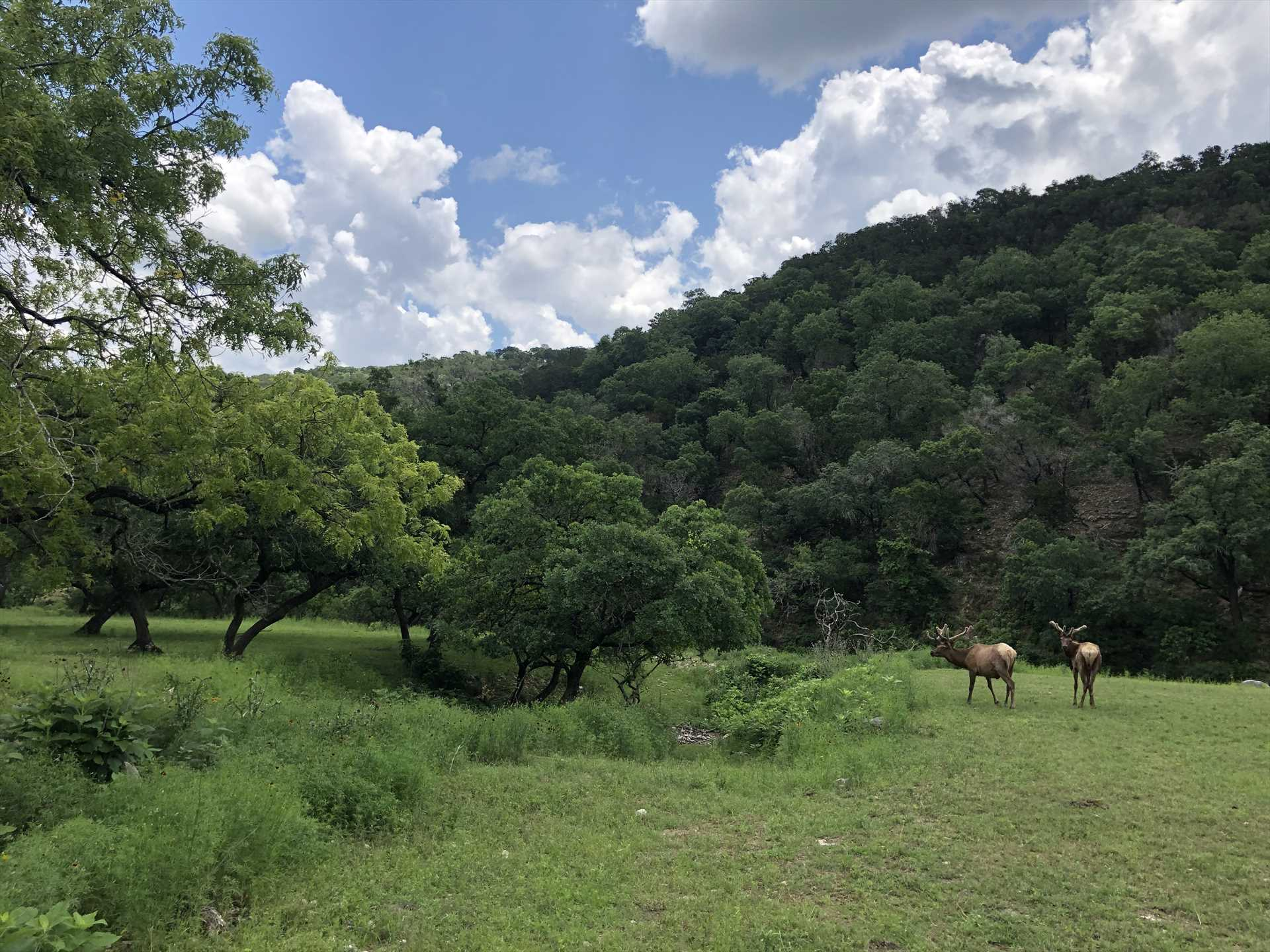 The local wildlife and stunning mountain views at the ranch set the stage for postcard-pretty sights everywhere you look!