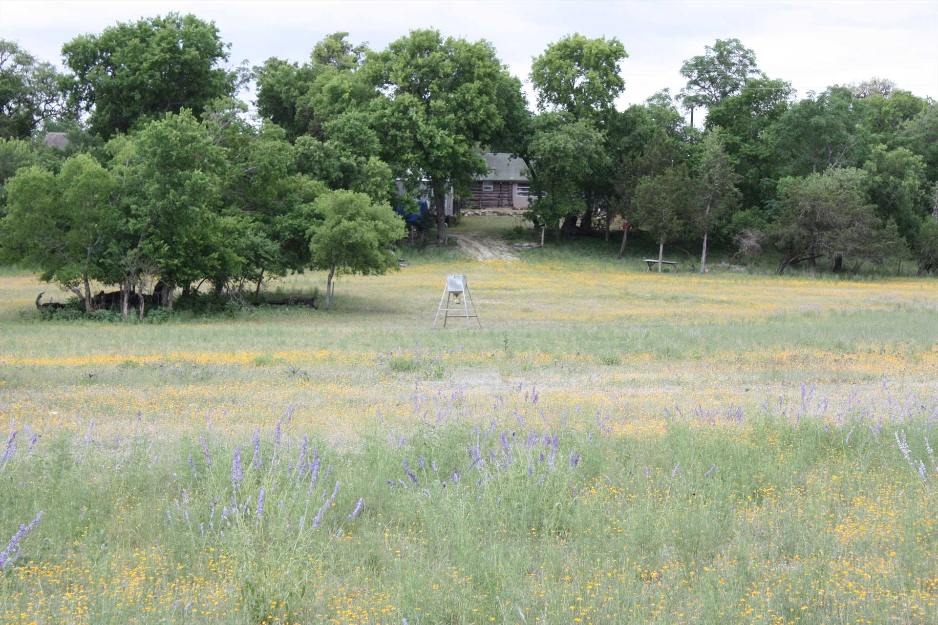 Behind the house is a spacious meadow, a wonderful place for kids and pets to romp and let off steam!
