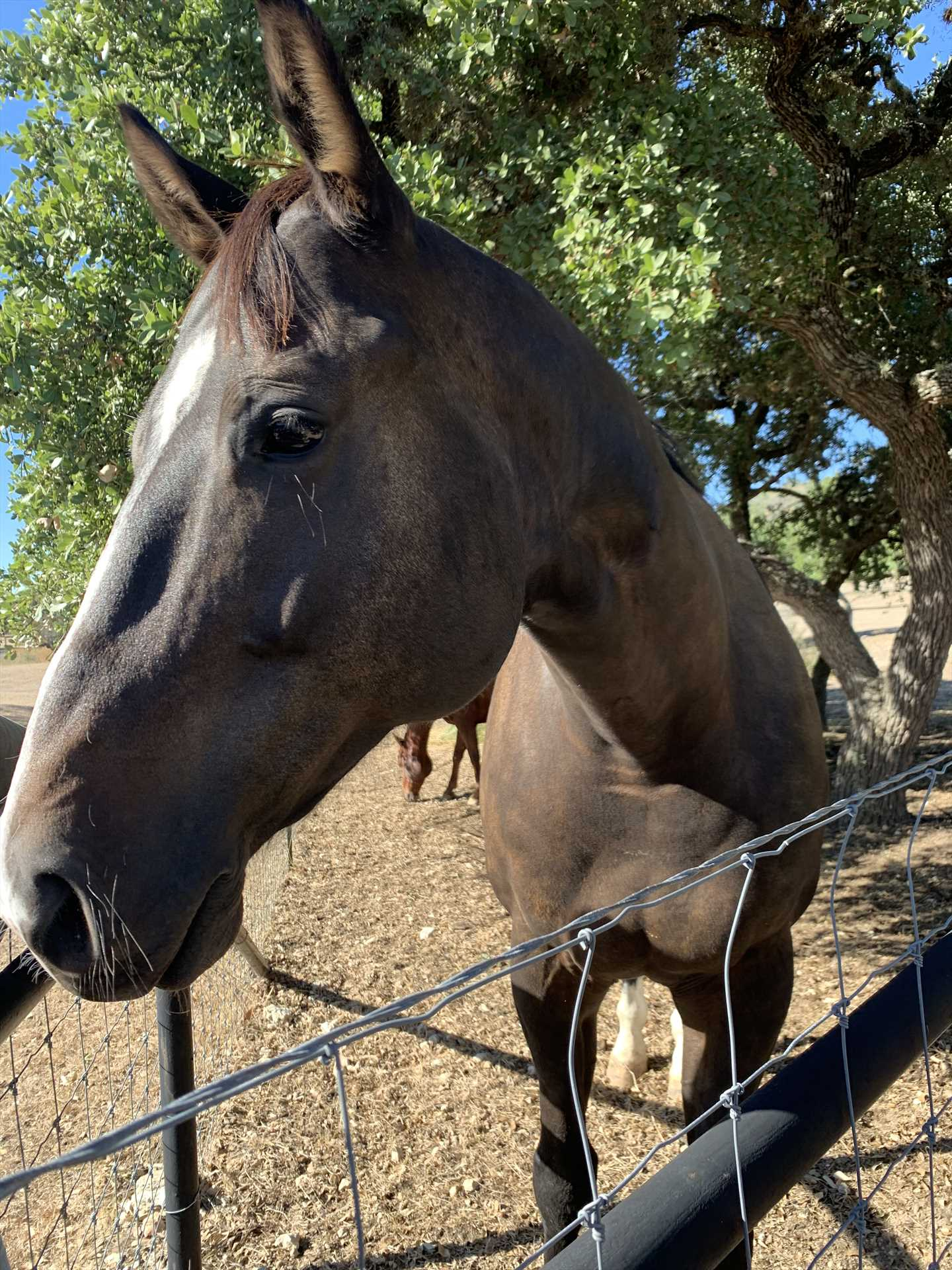 Enjoy the horses at Tabasco Ranch, and bring your own, if you'd like! Check with us for accommodation info.