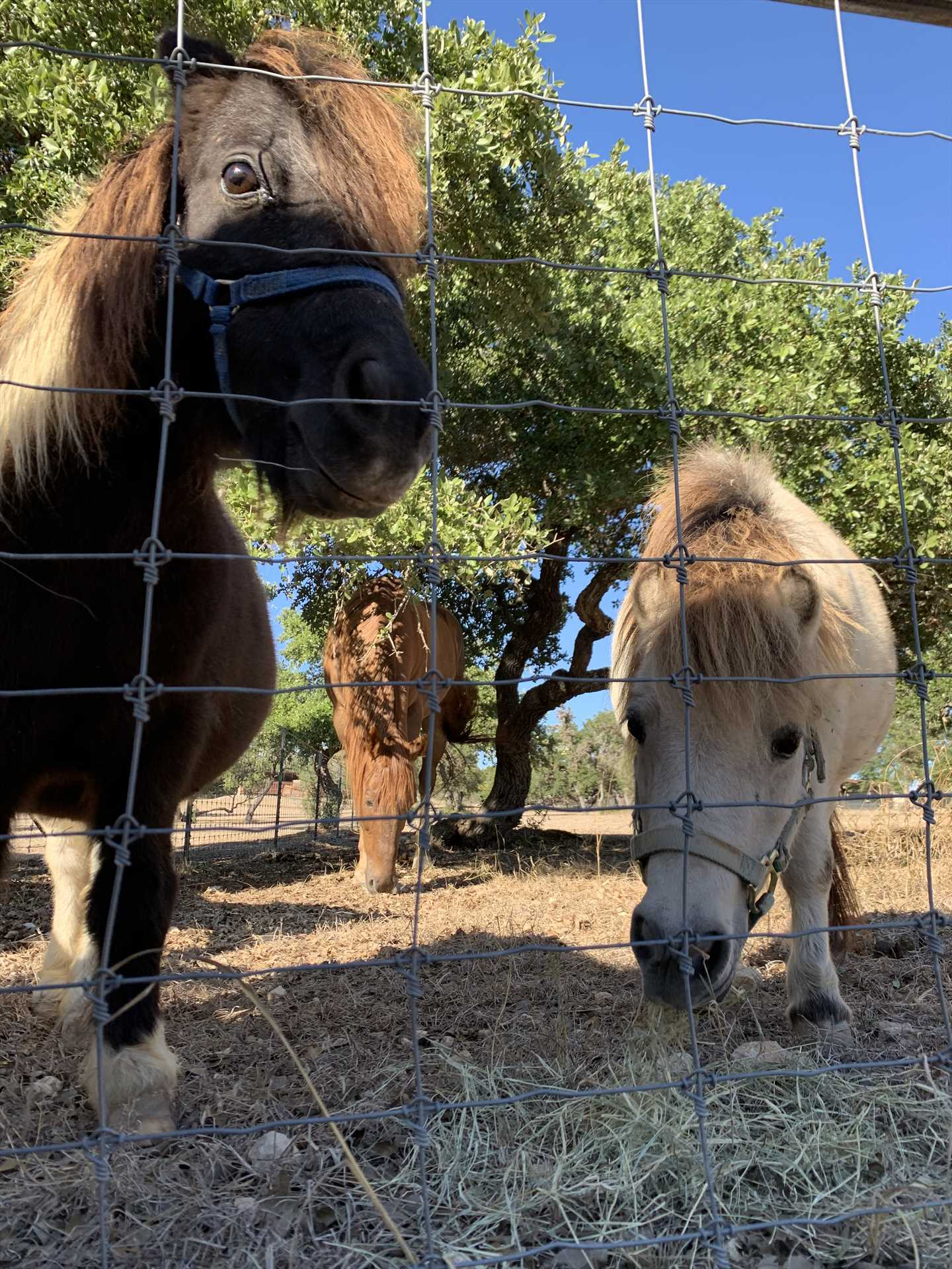 Buttercup and Jelly Bean are rescued miniature horses who have found a comfortable forever home on Tabasco Ranch.