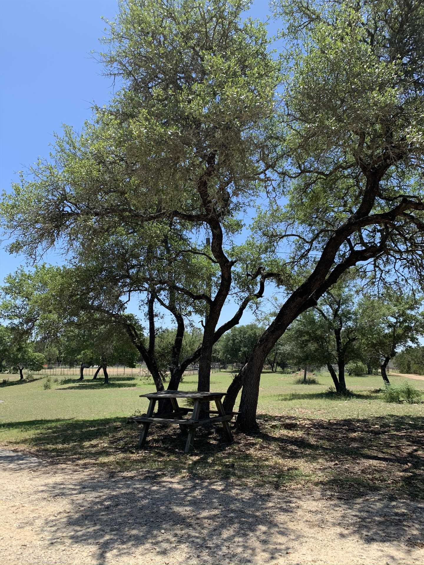 Imagine a country picnic in the shade, with soft Hill Country breezes and twittering birds as your background music!