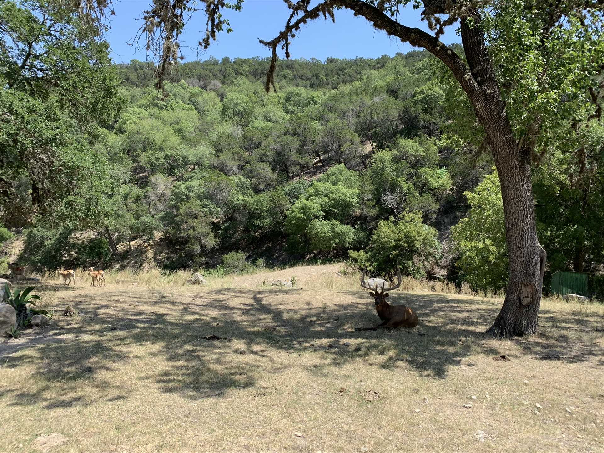 If you think the views on the ground are stunning (and they certainly are), check out the ranch's elevated observation deck!